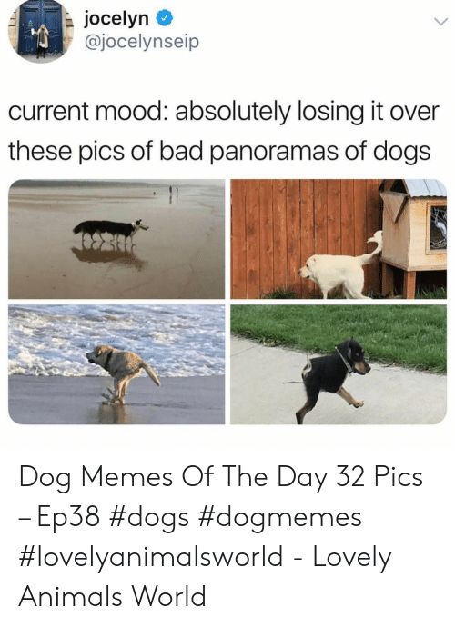 Current Mood: jocelyn  @jocelynseip  current mood: absolutely losing it over  these pics of bad panoramas of dogs Dog Memes Of The Day 32 Pics – Ep38 #dogs #dogmemes #lovelyanimalsworld - Lovely Animals World
