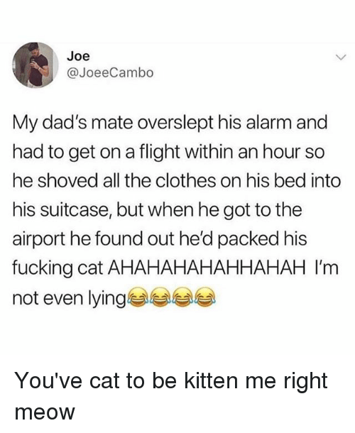 Cat To Be Kitten Me: Joe  JoeeCambo  My dad's mate overslept his alarm and  had to get on a flight within an hour so  he shoved all the clothes on his bed into  his suitcase, but when he got to the  airport he found out he'd packed his  fucking cat AHAHAHAHAHHAHAH I'm  not even lying You've cat to be kitten me right meow