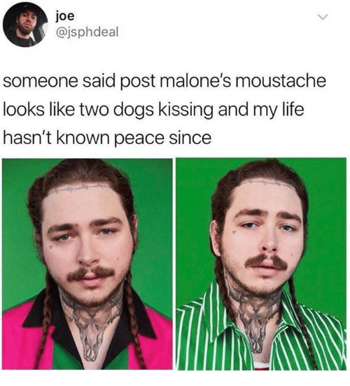 Dank, Dogs, and Life: joe  @jsphdeal  someone said post malone's moustache  looks like two dogs kissing and my life  hasn't known peace since