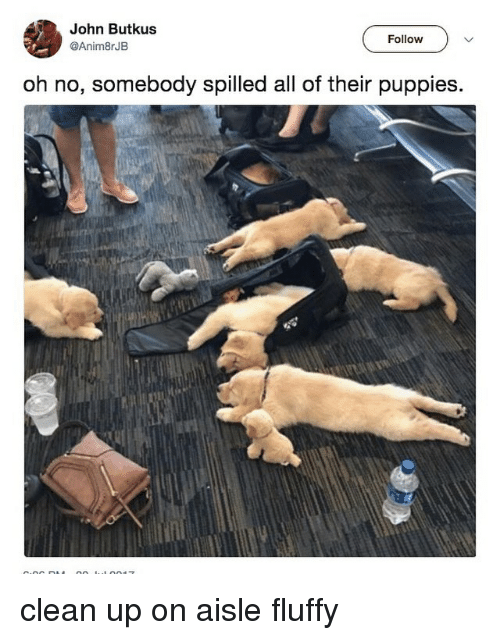 Puppies, Relatable, and Fluffy: John Butkus  @Anim8rJB  Follow  oh no, somebody spilled all of their puppies clean up on aisle fluffy