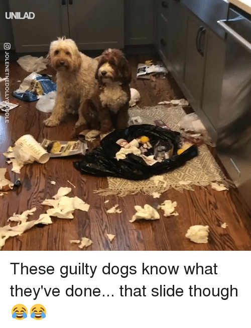 Dank, Dogs, and 🤖: @ JOLENETNEDOLLY  LE These guilty dogs know what they've done... that slide though 😂😂