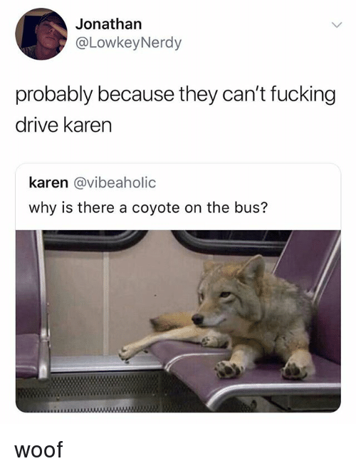 Fucking, Coyote, and Drive: Jonathan  @LowkeyNerdy  probably because they can't fucking  drive karen  karen @vibeaholic  why is there a coyote on the bus? woof