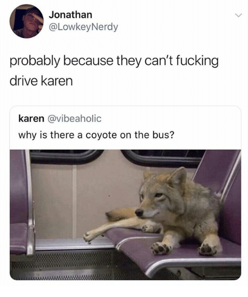 Dank, Fucking, and Coyote: Jonathan  @LowkeyNerdy  probably because they can't fucking  drive karen  karen @vibeaholic  why is there a coyote on the bus?