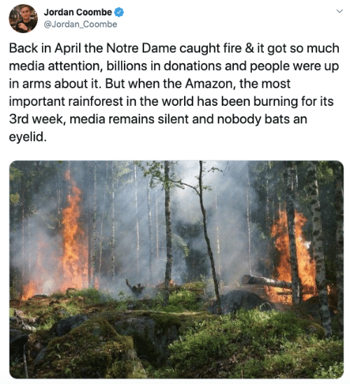 bats: Jordan Coombe  @Jordan_Coombe  Back in April the Notre Dame caught fire & it got so much  media attention, billions in donations and people were up  in arms about it. But when the Amazon, the most  important rainforest in the world has been burning for its  3rd week, media remains silent and nobody bats an  eyelid