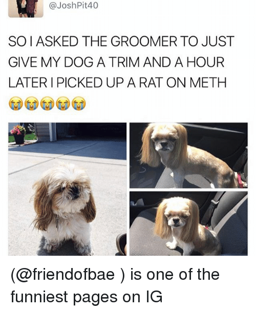 Groomers: @Josh Pit 40  SOIASKED THE GROOMER TO JUST  GIVE MY DOG A TRIM AND A HOUR  LATER I PICKED UP A RAT ON METH (@friendofbae ) is one of the funniest pages on IG