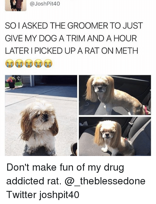 Groomers: @Josh Pit 40  SOIASKED THE GROOMER TO JUST  GIVE MY DOG A TRIM AND A HOUR  LATER I PICKED UP A RAT ON METH Don't make fun of my drug addicted rat. @_theblessedone Twitter joshpit40