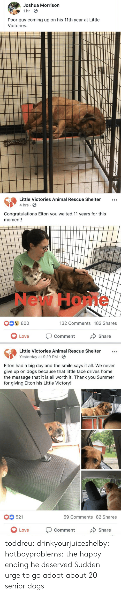 Elton: Joshua Morrison  Poor guy coming up on his 11th year at Little  Victories   Little Victories Animal Rescue Shelter...  4 hrs  Congratulations Elton you waited 11 years for this  moment!  New Home  0 800  132 Comments 182 Shares  OLove  Comment  Share   Little Victories Animal Rescue Shelter  Yesterday at 9:19 PM.  Elton had a big day and the smile says it all. We never  give up on dogs because that little face drives home  the message that it is all worth it. Thank you Summer  for giving Elton his Little Victory!  521  59 Comments 82 Shares  Love Comment  Share toddreu:  drinkyourjuiceshelby:  hotboyproblems: the happy ending he deserved   Sudden urge to go adopt about 20 senior dogs