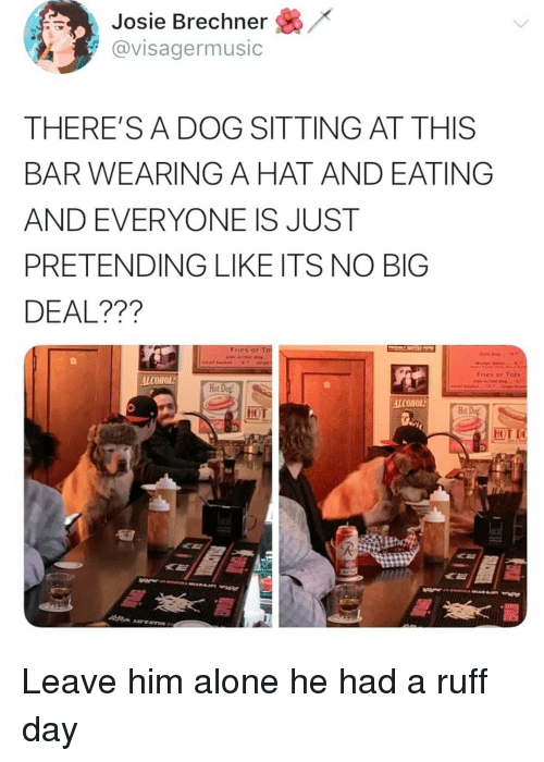 no big deal: Josie Brechner /  avisagermusic  THERE'SA DOG SITTING AT THIS  BAR WEARING A HAT AND EATING  AND EVERYONE IS JUST  PRETENDING LIKE ITS NO BIG  DEAL???  Fries ar  Fries or Tats  ALCOHOL  Hot Do  ALCOHOL  MOL Leave him alone he had a ruff day