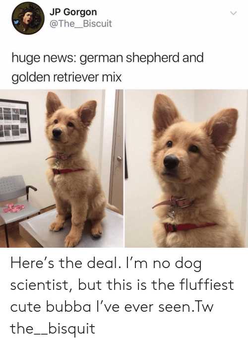 Bubba: JP Gorgon  @The_Biscuit  huge news: german shepherd and  golden retriever mix Here's the deal. I'm no dog scientist, but this is the fluffiest cute bubba I've ever seen.Tw the__bisquit