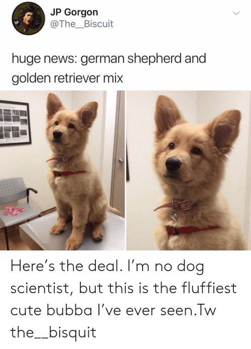 retriever: JP Gorgon  @The_Biscuit  huge news: german shepherd and  golden retriever mix  Havno Here's the deal. I'm no dog scientist, but this is the fluffiest cute bubba I've ever seen.Tw the__bisquit