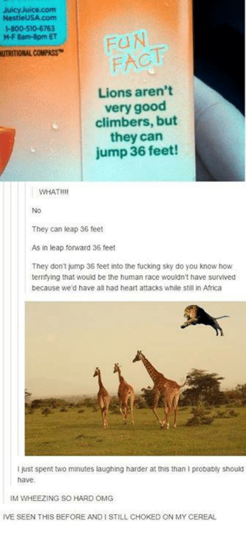 Africa, Fucking, and Omg: JuicyJuice.com  1-800-510-6763  M-F 8am-8pm ET  UTRITIONAL COMPASS  FACT  Lions aren't  very good  climbers, but  they can  jump 36 feet!  WHATHI  No  They can leap 36 feet  As in leap forward 36 feet  They don't jump 36 feet into the fucking sky do you know how  terrifying that would be the human race wouldn't have survived  because we'd have all had heart attacks while still in Africa  i just spent two minutes laughing harder at this than I probably should  have  IM WHEEZING SO HARD OMG  IVE SEEN THIS BEFORE AND I STILL CHOKED ON MY CEREAL