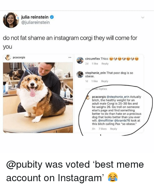 """Bitch, Corgi, and Funny: julia reinstein  @juliareinstein  do not fat shame an instagram corgi they will come for  you  pcacorgis  2d 1 like Reply  stephonie erin That poor dog is so  obese  d 1 like Reply  de replies  pcacorgis @stephonie erin Actually  bitch, the healthy weight for an  adult male Corgi is 25-30 lbs and  he weighs 26. Go troll on someone  else's page and find something  better to do than hate on a precious  dog that looks better than you ever  will. @moffittier @brambi76 look at  this bitch calling Pax """"so obese.""""  8h 7 likes Reply @pubity was voted 'best meme account on Instagram' 😂"""