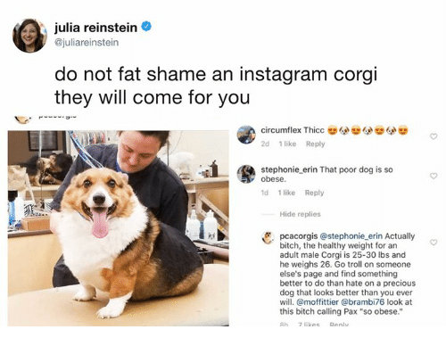 "Bitch, Corgi, and Dank: julia reinstein  @juliareinstein  do not fat shame an instagram corgi  they will come for you  circumflex Thicc  2d 1 like Reply  stephonie erin That poor dog is so  obese.  ld 1 like Reply  Hide replies  pcacorgis @stephonie_erin Actually  bitch, the healthy weight for an  adult male Corgi is 25-30 lbs and  he weighs 26. Go troll on someone  else's page and find something  better to do than hate on a precious  dog that looks better than you ever  will. @moffittier @brambi76 look at  this bitch calling Pax ""so obese."""