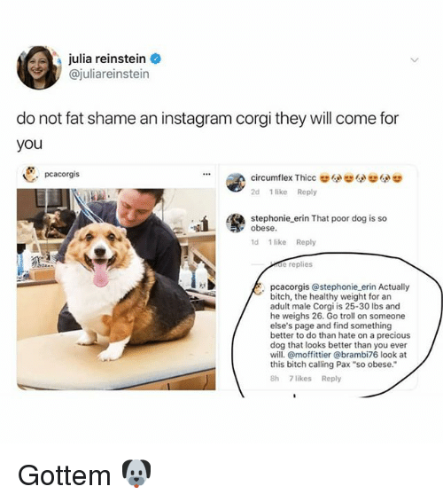 "Bitch, Corgi, and Instagram: julia reinstein  @juliareinstein  do not fat shame an instagram corgi they will come for  you  pcacorgis  circumflex Thicc  2d 1 like Reply  4  stephonie erin That poor dog is so  obese.  1d 1 likeReply  de replies  pcacorgis @stephonie erin Actually  bitch, the healthy weight for an  adult male Corgi is 25-30 lbs and  he weighs 26. Go troll on someone  else's page and find something  better to do than hate on a precious  dog that looks better than you ever  will. @moffittier @brambi76 look at  this bitch calling Pax ""so obese.""  8h 7 likes Reply Gottem 🐶"