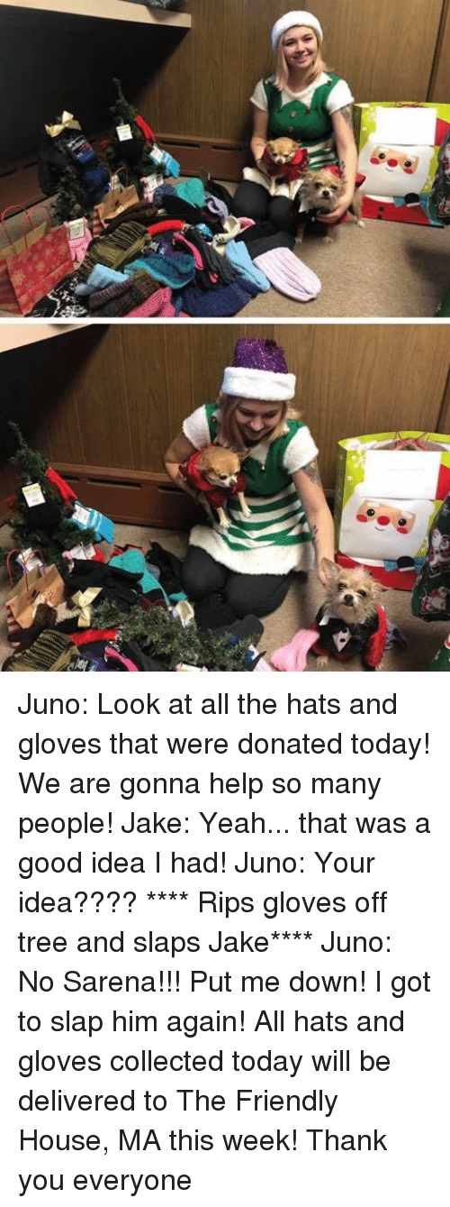 gloves off: Juno: Look at all the hats and gloves that were donated today! We are gonna help so many people!  Jake: Yeah... that was a good idea I had!  Juno: Your idea????  **** Rips gloves off tree and slaps Jake****  Juno: No Sarena!!! Put me down! I got to slap him again!  All hats and gloves collected today will be delivered to The Friendly House, MA this week!  Thank you everyone
