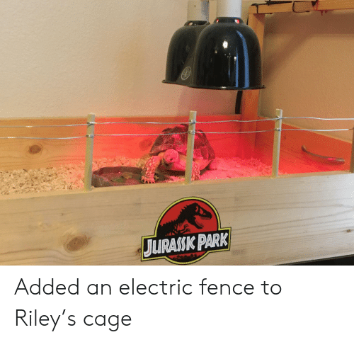 park: JURASSK PARK Added an electric fence to Riley's cage