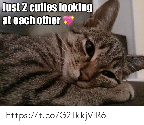 cuties: Just 2 cuties looking  at each other https://t.co/G2TkkjVlR6