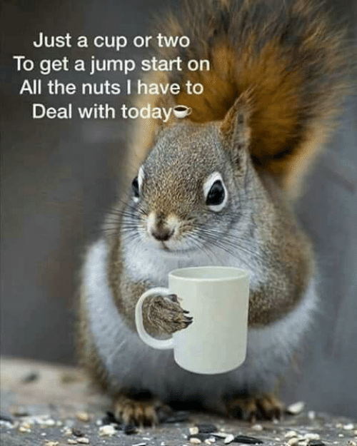 jump start: Just a cup or two  To get a jump start on  All the nuts I have to  Deal with today
