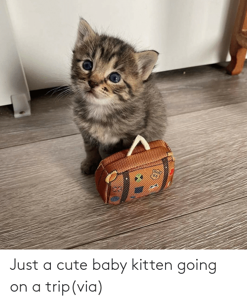 A Cute: Just a cute baby kitten going on a trip(via)