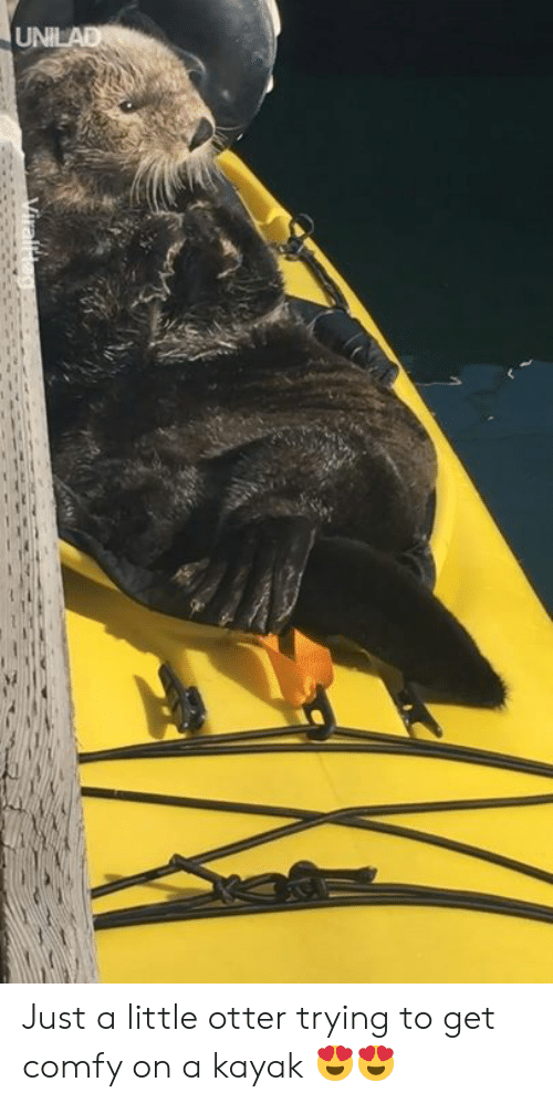 Kayak: Just a little otter trying to get comfy on a kayak 😍😍