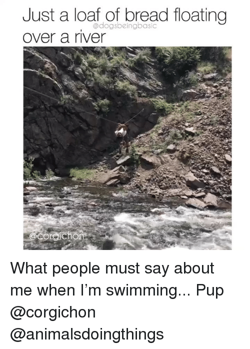 Memes, Swimming, and Pup: Just a loaf of bread floating  over a river  @dogsbeingbasic What people must say about me when I'm swimming... Pup @corgichon @animalsdoingthings