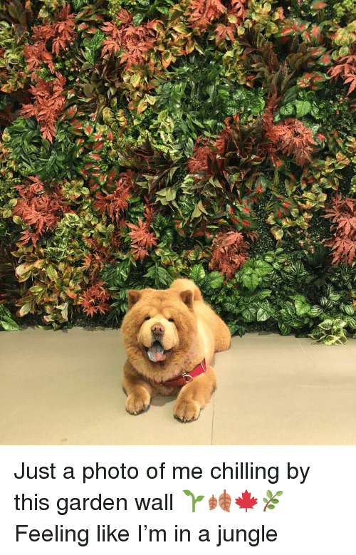Memes, 🤖, and Photo: Just a photo of me chilling by this garden wall 🌱🍂🍁🌿 Feeling like I'm in a jungle
