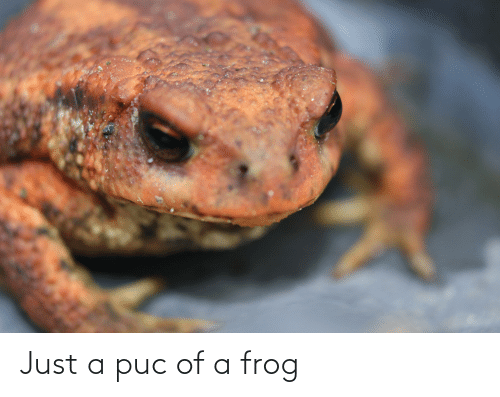 frog: Just a puc of a frog
