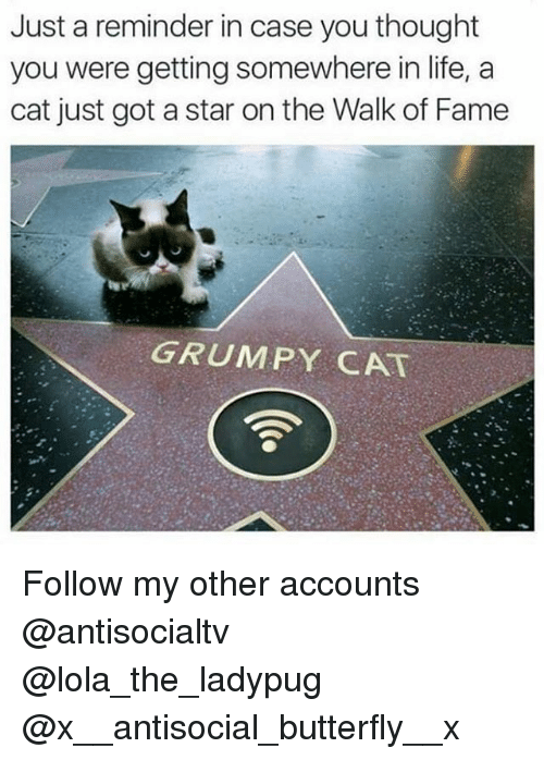 Life, Memes, and Grumpy Cat: Just a reminder in case you thought  you were getting somewhere in life, a  cat just got a star on the Walk of Fame  GRUMPY CAT Follow my other accounts @antisocialtv @lola_the_ladypug @x__antisocial_butterfly__x