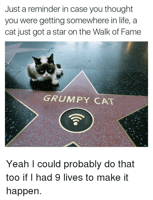 Funny, Life, and Yeah: Just a reminder in case you thought  you were getting somewhere in life, a  cat just got a star on the Walk of Fame  GRUMPY CAT Yeah I could probably do that too if I had 9 lives to make it happen.