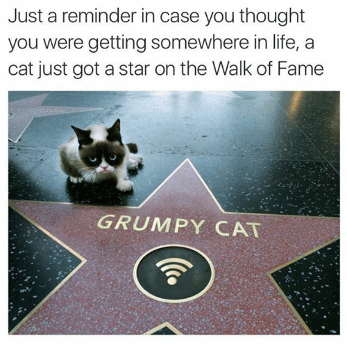 Dank, Life, and Grumpy Cat: Just a reminder in case you thought  you were getting somewhere in life, a  cat just got a star on the Walk of Fame  GRUMPY CAT