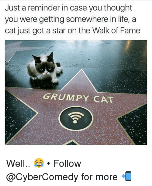 Walk Of Fame Grumpy Cat