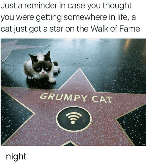 Grumpy Cats: Just a reminder in case you thought  you were getting somewhere in life, a  cat just got a star on the Walk of Fame  GRUMPY CAT night