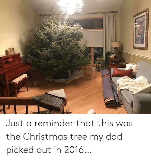 In 2016: Just a reminder that this was the Christmas tree my dad picked out in 2016…
