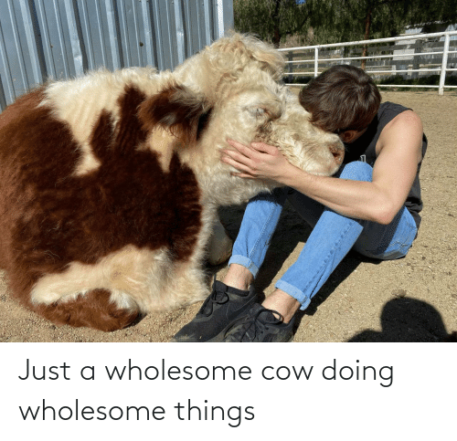 cow: Just a wholesome cow doing wholesome things