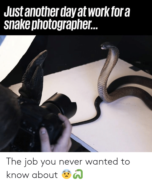 just another day: Just another day at workfora  snakephotographer. The job you never wanted to know about 😨🐍