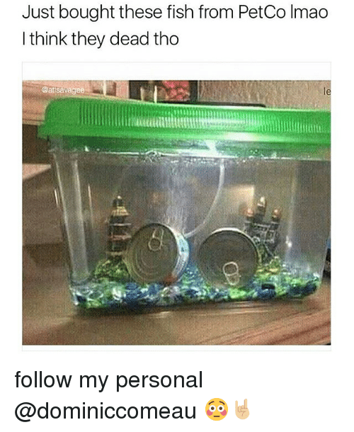 Lmao, Memes, and Fish: Just bought these fish from PetCo lmao  I think they dead tho  Oatsavagee follow my personal @dominiccomeau 😳🤘🏼
