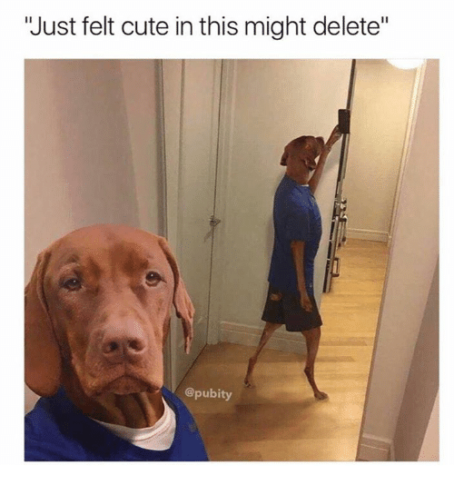 "Cute, Dank, and 🤖: ""Just felt cute in this might delete""  @pubity"