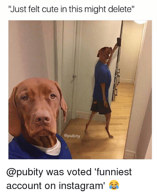 "Cute, Instagram, and Memes: ""Just felt cute in this might delete""  @pubity @pubity was voted 'funniest account on instagram' 😂"