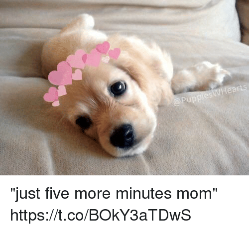 """Girl Memes, Mom, and Five: """"just five more minutes mom"""" https://t.co/BOkY3aTDwS"""