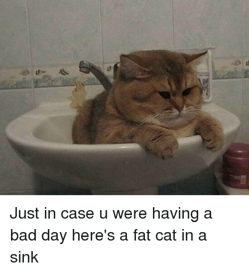 Just in Case U Were Having a Bad Day Here's a Fat Cat in a ...