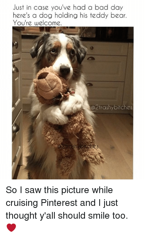 Youre Welcom: Just in case you've had a bad day  here's a dog holding his teddy bear  You're welcome  2 trashy bitches So I saw this picture while cruising Pinterest and I just thought y'all should smile too. ❤