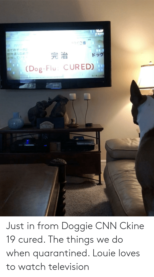 Television: Just in from Doggie CNN Ckine 19 cured. The things we do when quarantined. Louie loves to watch television