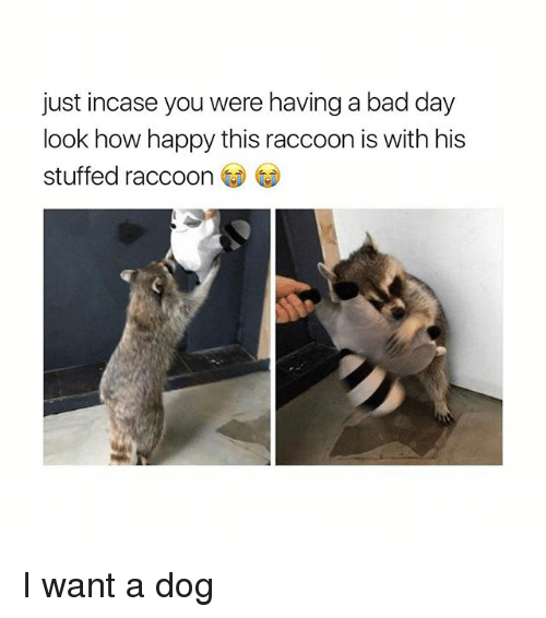 Bad, Bad Day, and Happy: just incase you were having a bad day  look how happy this raccoon is with his  stuffed raccoon I want a dog