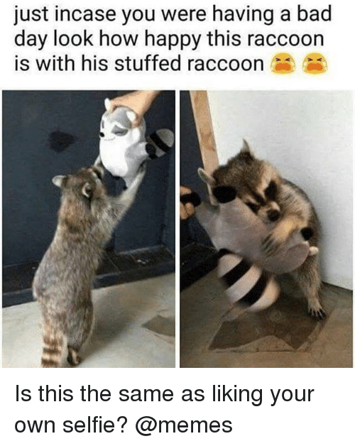 Bad, Bad Day, and Memes: just incase you were having a bad  day look how happy this raccoon  is with his stuffed raccoon Is this the same as liking your own selfie? @memes