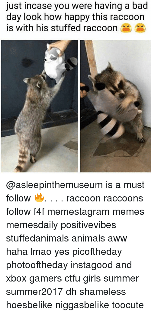 Animals, Aww, and Bad: just incase you were having a bad  day look how happy this raccoon  is with his stuffed raccoon @asleepinthemuseum is a must follow 🔥. . . . raccoon raccoons follow f4f memestagram memes memesdaily positivevibes stuffedanimals animals aww haha lmao yes picoftheday photooftheday instagood and xbox gamers ctfu girls summer summer2017 dh shameless hoesbelike niggasbelike toocute