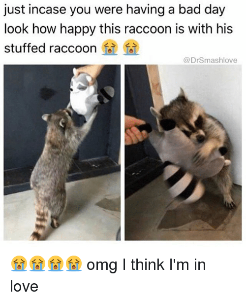 Bad, Bad Day, and Love: just incase you were having a bad day  look how happy this raccoon is with his  stuffed raccoon  @DrSmashlove 😭😭😭😭 omg I think I'm in love