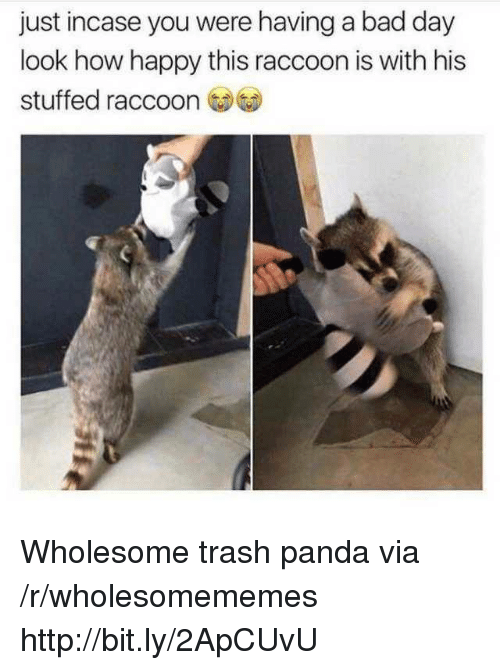 Trash Panda: just incase you were having a bad day  look how happy this raccoon is with his  stuffed raccoo Wholesome trash panda via /r/wholesomememes http://bit.ly/2ApCUvU