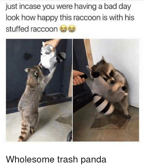Trash Panda: just incase you were having a bad day  look how happy this raccoon is with his  stuffed raccoo Wholesome trash panda