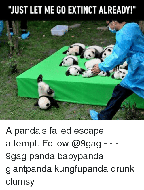 "9gag, Drunk, and Memes: ""JUST LET ME GO EXTINCT ALREADY!"" A panda's failed escape attempt. Follow @9gag - - - 9gag panda babypanda giantpanda kungfupanda drunk clumsy"