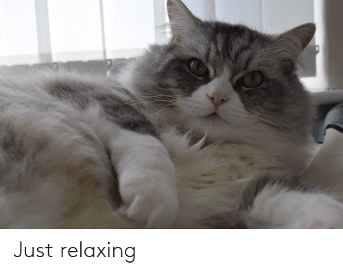 Just Relaxing: Just relaxing